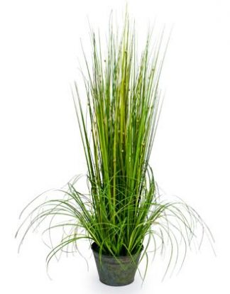 Our small ornamental grass measures 75cm tall. This super little plant has an abundance of tiny white blooms throughout the lush green makes it very versatile.