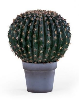This small artificial ball cactus is beautifully finished with great detailing and texture. Measures 33 high and 25cm round