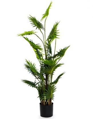 This superb large palm tree is artificial! Stands 145cm tall. Wonderful colour, feel, detail and finish. Perfect in any room ,honestly!! Great value.