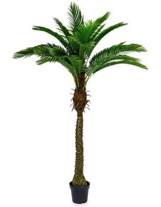 This large palm tree has super texture, detail, finish and colour. It looks so real! Requires no watering or pruning!! 200cm tall, approximately 120cm wide.