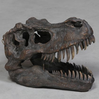 large T-Rex dinosaur head wall hanging superbly painted resin skull ornament that measures 37 x 30 x 52cm