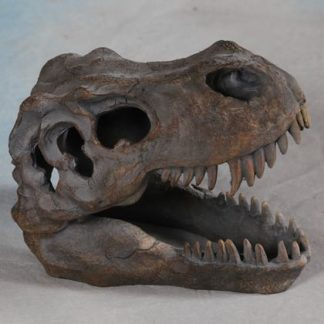 T-Rex dinosaur skull ornament table decor measures 12 x 16 x 20cm and has great paint finish texture and detailing