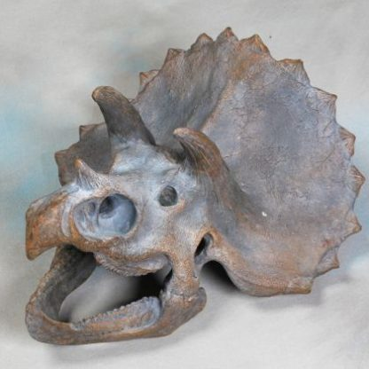 This large triceratops dinosaur head wall hanging is an absolute must for a fossil lover. measures 40 x 45 x 28cm a great gift