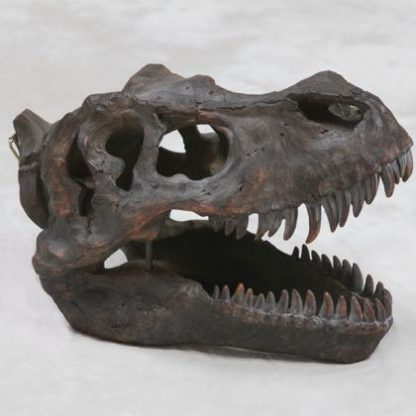 T-Rex dinosaur head wall hanging skull that looks like a fossil and has great texture and detailing. Measures 21 x 26 x36cm