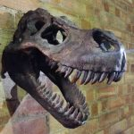 dinosaur head hanging from a wall