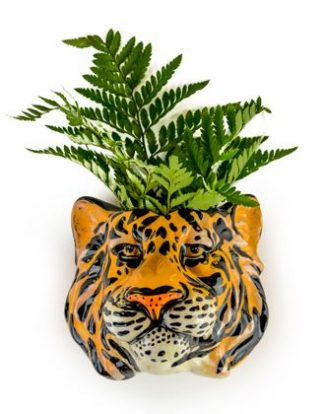 Tony, our tiger head wall vase is sure to be noticed!! Hand painted and finished with a super glossy glaze he is the perfect gift! H14 x W17 x D14cm.