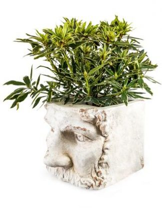 """This stone effect classical face planter is so different yet stylish! What hair will you grow for him?! It has the face of a classical """"God'. 45 x 36 x 35cm"""