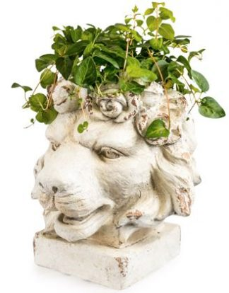 Meet Lionel our magnificent lion planter! Superb cream distressed colour and finish. What will you plant for his mane? 43 x 40 x 36cm. Good value.